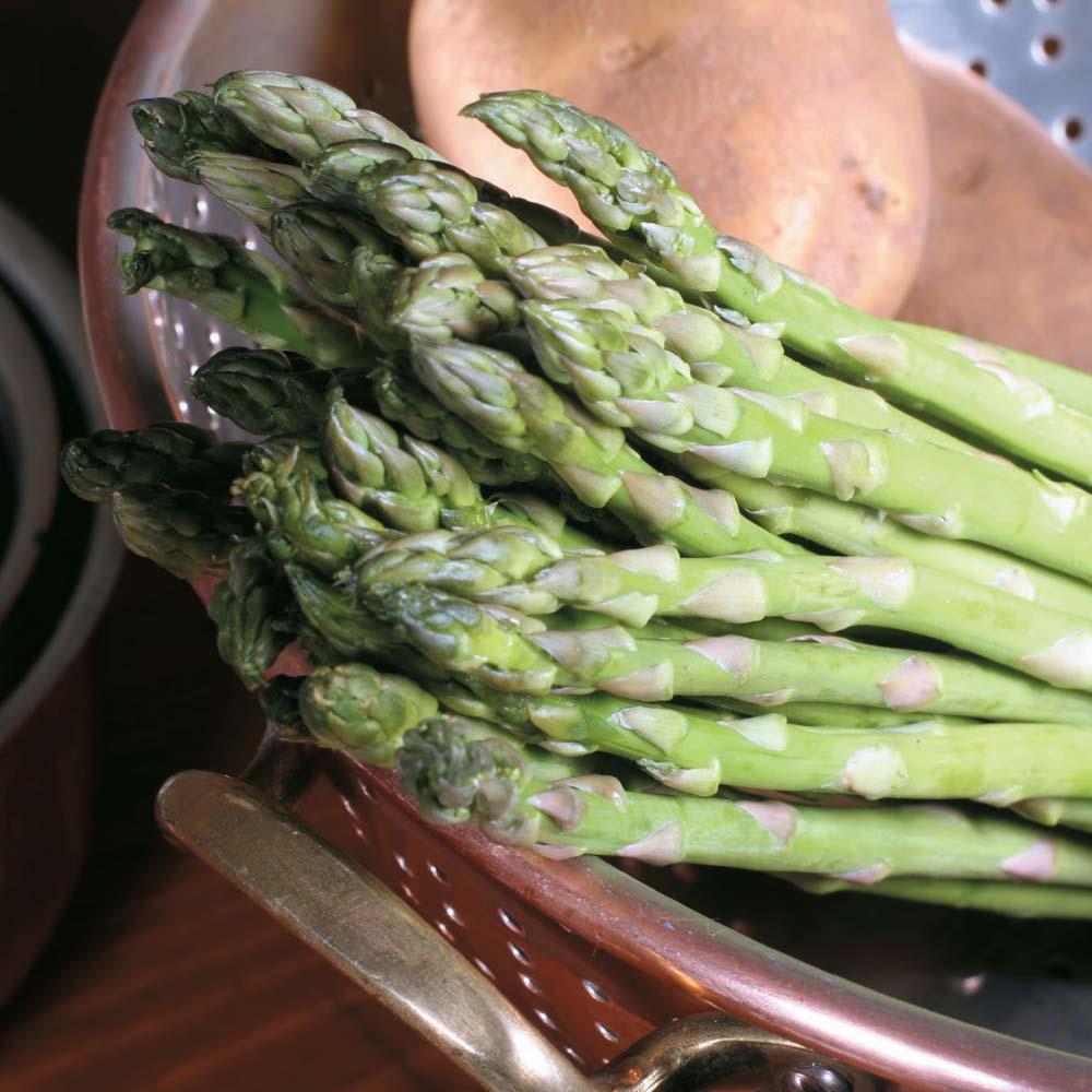 Asparagus : Backlim : Spring Planting 10 crowns