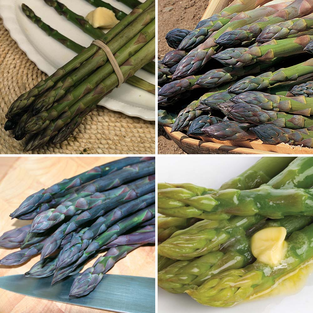 Asparagus : Spring Planting Collection half - 20 crowns - 5 of each