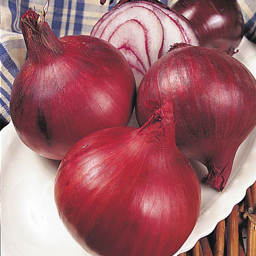 Onion : Autumn Planting : Electric 2 packs