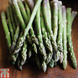 Asparagus officinalis 'Ariane' (Autumn Planting) - 25 crowns