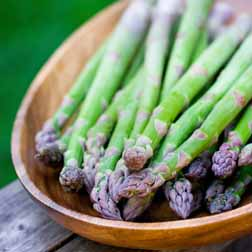 Asparagus officinalis 'Pacific Challenger' (Spring Planting) - 10 crowns