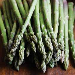 Asparagus officinalis 'Ariane' - Part of the Alan Titchmarsh Collection - 5 crowns