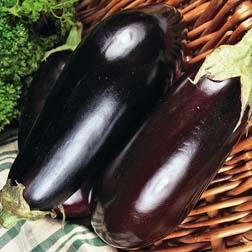 Aubergine 'Black Enorma' F1 Hybrid - 1 packet (40 seeds)