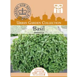 Basil 'Aristotle' - 1 packet (35 seeds)