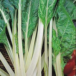 Leaf Beet 'Lucullus' - 1 packet (200 seeds)