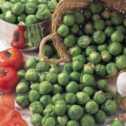 Brussels Sprout 'Bedford Fillbasket' - 1 packet (100 seeds)