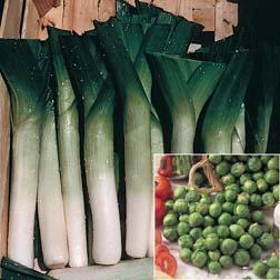 Brussels Sprout 'Bedford Fillbasket' PLUS Leek 'Oarsman' (Winter Warmer) - 2 packets - 1 of each variety (140 seeds in total)