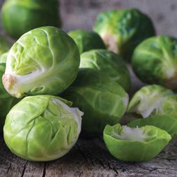 Brussels Sprout 'Trafalgar' F1 Hybrid - 15 plants