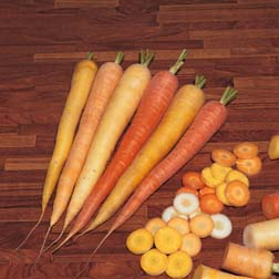 Carrot `Rainbow` F1 Hybrid 1 packet (300 carrot seeds)