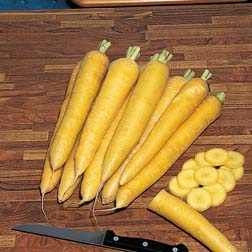 Carrot : Yellowstone - 1 packet (1500 seeds)
