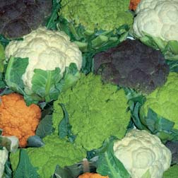 Coloured Cauliflower Collection B - 3 packets - 1 of each variety (45 seeds in total)