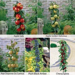 Fruit Tree Collection (Mini Fruit Tree)  1 x Patio Fruit Tree Collection