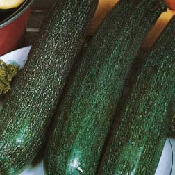 Courgette All Green Bush - 1 packet (25 seeds)