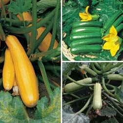 Courgette Coloured Collection - 3 packets - 1 of each variety