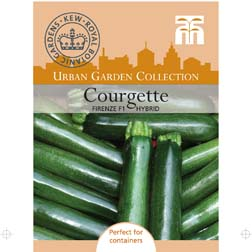 Courgette Firenze F1 Hybrid - 1 packet (6 seeds)