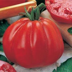 Tomato 'Cuore di Bue' - Vita Sementi® Italian Seeds - 1 packet (390 seeds)
