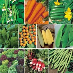 Easy Grow Vegetable Collection - SPECIAL OFFER - 10 packets - 1 of each variety