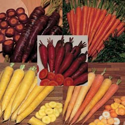 Carrot : Healthy Coloured Collection - 5 packets - 1 of each