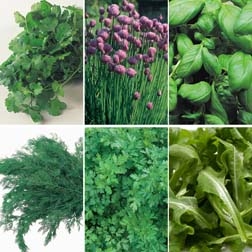 Herb Collection - SPECIAL OFFER - 6 packets - 1 of each