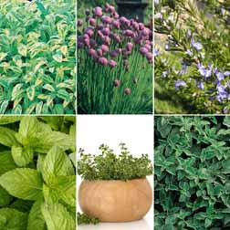 Herb 'Mixed Culinary Collection' - 6 plants - 1 of each variety