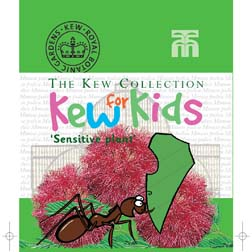 Mimosa pudica - Kew for Kids Children's Seeds - 1 packet (50 seeds)