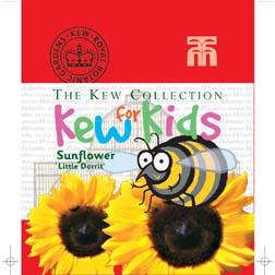 Sunflower 'Little Dorrit' - Kew for Kids Children's Seeds - 1 packet (25 seeds)