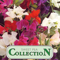 Sweet Pea Collection - 1 packet (6 foils) (60 seeds)