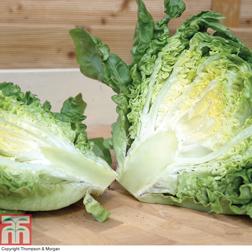 Lettuce 'Little Gem' (Cos) - 1 packet (1250 seeds)