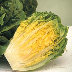 Lettuce 'Winter Gem' (Cos) - 1 packet (150 seeds)
