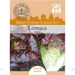 Lettuce 'Dazzle' (Cos) - 1 packet (300 seeds)