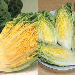 Lettuce 'Gem Collection' (Cos) - 2 packets - 1 of each variety (1400 seeds in total)