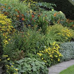 Lucky Dip (Perennials) - 1 lucky dip - perennials