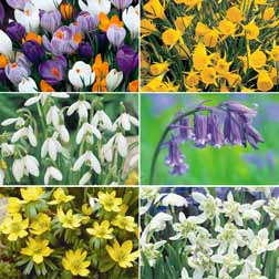 Naturalising Bulbs Collection - 165 bulbs - 1 pack of each variety