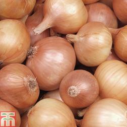 Onion 'Hercules' (Spring Planting) - 250g/50 sets