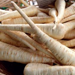 Parsnip 'Albion' - 1 packet (300 seeds)