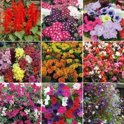 Patio, Bedding and Basket Pack variety - 108 plugs - 12 of each variety