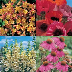 Perennial Garden Collection - 4 packets - 1 of each variety