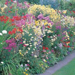 Perennial Bumper Pack - £100 worth of perennial plants