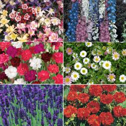 Perennial Pack A T&Ms Choice  36 perennial plug plants  6 of each variety