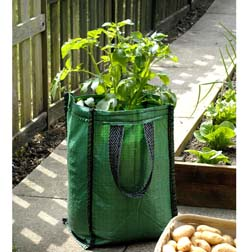 Potato Patio Planters - 3 patio planters