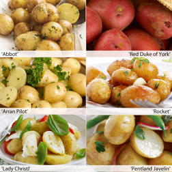 Potato 'Favourite Earlies Collection A' - 60 tubers - 10 of each variety