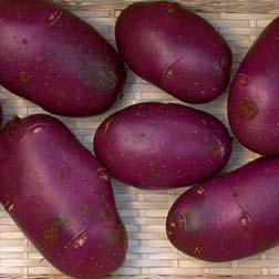 Potato 'Blue Danube' - 20 tubers