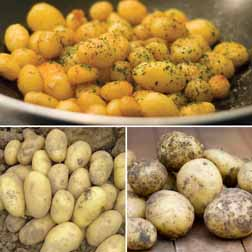 Potato 'Multi Minis Collection' - 15 tubers - 5 of each variety