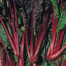 Leaf Beet 'Rhubarb Chard' - 1 packet (150 seeds)