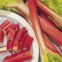 Rhubarb 'Glaskin's Perpetual' - 1 packet (60 seeds)