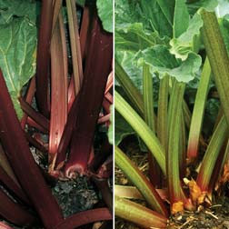 Rhubarb RHS Collection (Spring Planting) - 2 plants - 1 of each variety