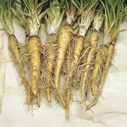 Salsify (Sandwich Island) - 1 packet (150 seeds)