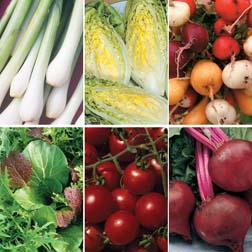 Salad Garden Collection - SPECIAL OFFER - 6 packets - 1 of each variety (3265 seeds in total)