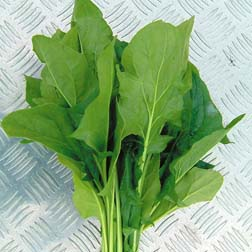 Spinach 'Mikado' F1 Hybrid - 1 packet (500 seeds)
