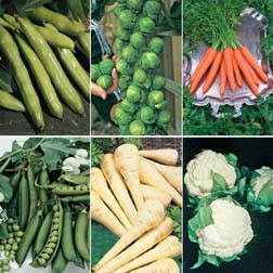 Sunday Lunch Vegetable Collection - SPECIAL OFFER - 6 packets - 1 of each variety (1120 seeds in total)